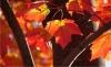 leaves wide